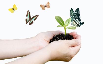 掌の土に葉っぱが生えて蝶が集まる